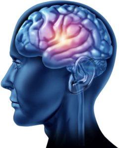 חוקרים את מחלת האלצהיימר